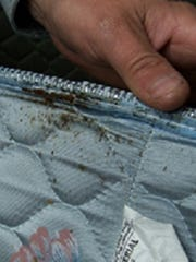 A mattress infested with bedbugs.
