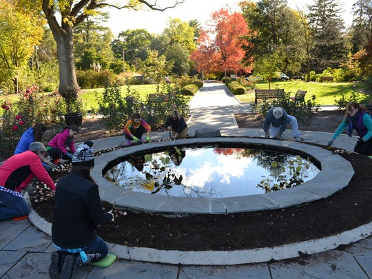 """Volunteers from """"Living with RSDS"""" work with Horticulture Staff at Colonial Park Gardens to plant 1,000 tulip bulbs around the pond at Rudulf van der Goot Rose Garden"""