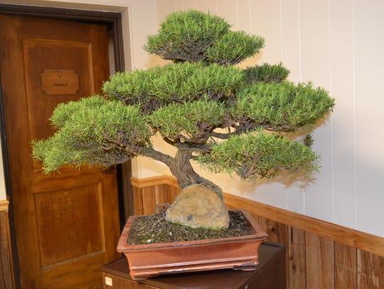 Bonsai, a living art form that originated about 17,000
