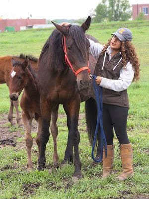 Student Amy Marroquin works with mares and foals at the University of Illinois horse farm.