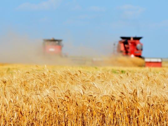 organic-wheat.jpg