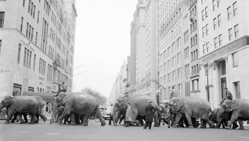 """FILE - In this March 27, 1955 file photo, a policeman calmly directs a parade of elephants across the busy intersection of Fifth Avenue and 57th Street in New York. The parade heralds the arrival of the Ringling Bros. and Barnum & Bailey Circus for the season. The Ringling Bros. and Barnum & Bailey Circus will end """"The Greatest Show on Earth"""" in May 2017, following a 146-year run of performances. Kenneth Feld, the chairman and CEO of Feld Entertainment, which owns the circus, told The Associated Press when the company removed the elephants from the shows in May of 2016, ticket sales declined more dramatically than expected."""