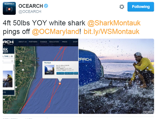 Montauk Shark Screen Shot