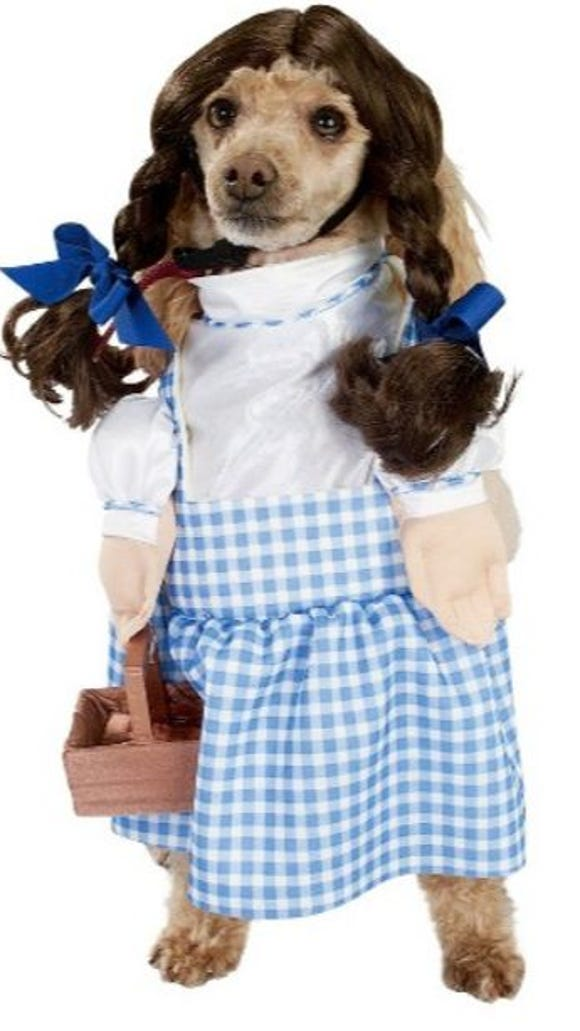 A Dorothy costume for a dog for Halloween from Target.