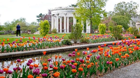 20,000 spring bulbs at Untermyer Gardens in Yonkers