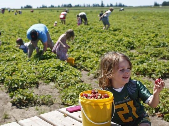 Buckets are included with the cost of strawberry picking at Berries, Brews & BBQ's Festival in June at French Prairie Gardens and Family Farm in St. Paul.