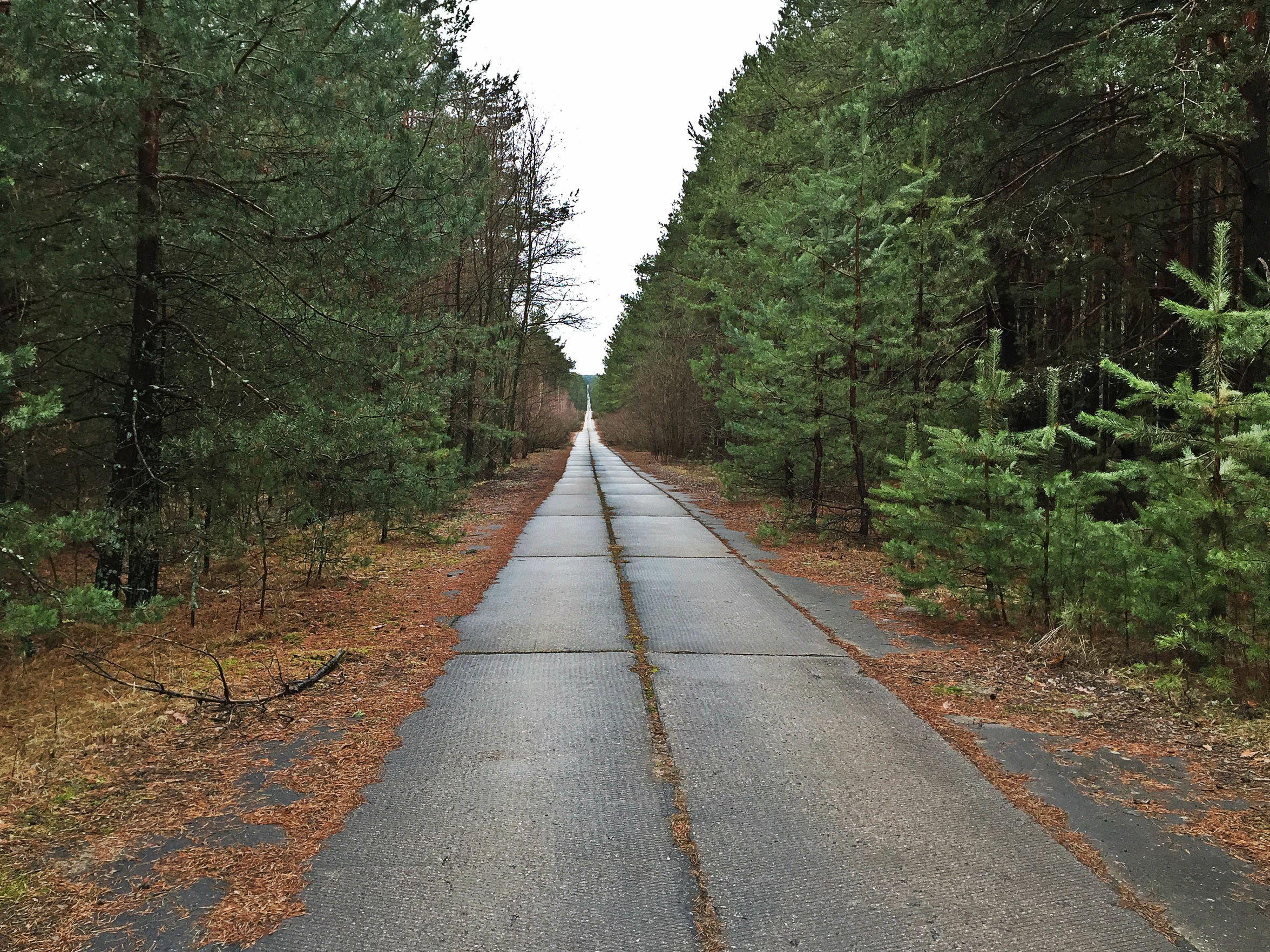 A view of a road in Ukraine's Chernobyl Exclusion Zone.