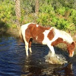 This horse doesn't have to be led to water