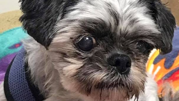 Shady, a 13-year-old Shitzu mix and one of the newest residents at Marty's Place Senior Dog Sanctuary in Upper Freehold, will benefit when you clean out your closets to support senior dogs.