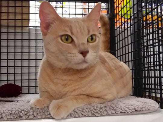 Ariana is available for adoption at 11129 Michigan