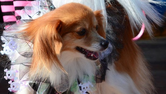 A princess pup competes in the Gadsden County Humane