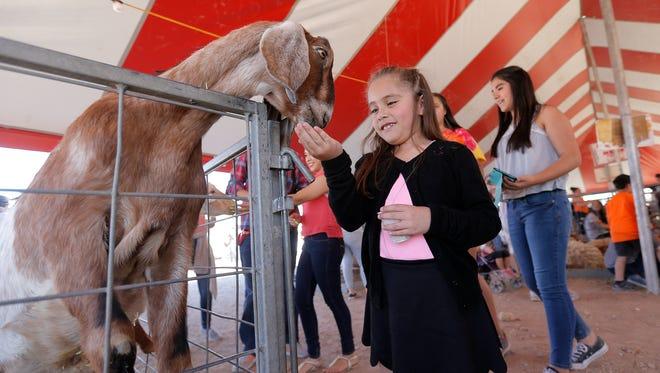 Isabella Escobar, 7, feeds a goat at the petting zoo Sunday at the Sun City Fair.