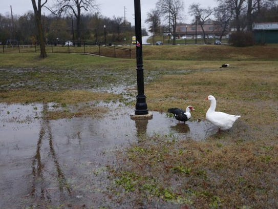 Two birds stand in a puddle after Springfield was hit