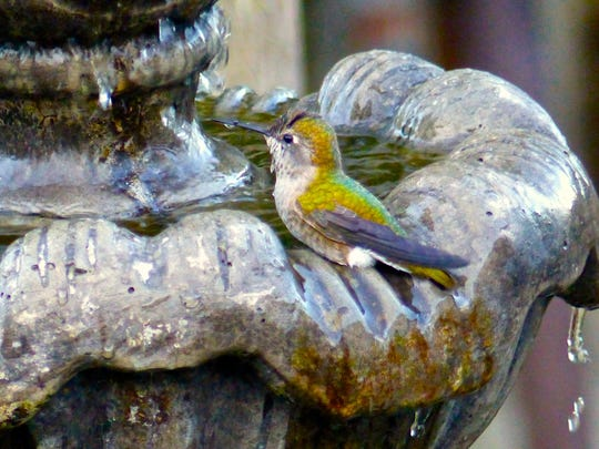 A small, inexpensive pump in a bird bath, like this