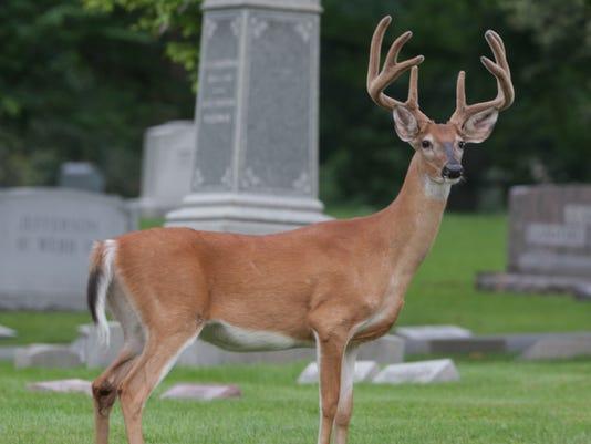 635827361494186062-013-deer