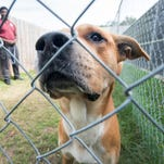 Wanted: Volunteers to play with dogs at Escambia County Animal Shelter