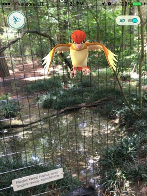 Tim Evans caught a Pidgeotto at the Tallahassee Museum.