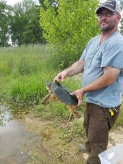 Luke Milbourne returns a turtle to Brandon's Crossgates Lake last April after it was rehabilitated by Central Mississippi Turtle Rescue over the winter.