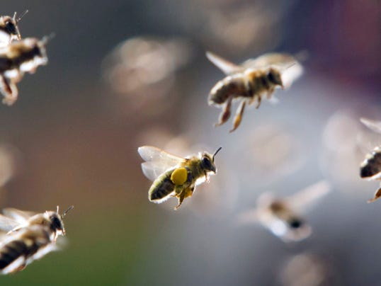 animal-bees-2.jpg