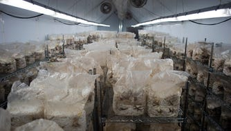 Mushrooms are grown in the former W.B. Bottle Co. plant in Bay View.
