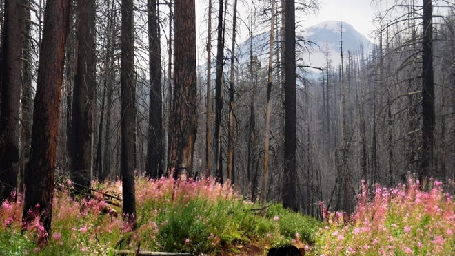 The South Sister and fireweed are seen on Chush Falls Trail in summer. The trail is usually passable until Thanksgiving.