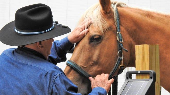 Bob Del Vecchio gets Dandy ready for a ride.