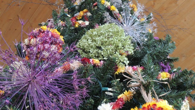 Dried florals including allium, hydrangea, strawflower, ornamental grasses and more are gathered from the Green Bay Botanical Garden by horticulture staff and volunteers all season long in preparation for the naturally decorated tree that stands in the lobby during the Garden of Lights event.