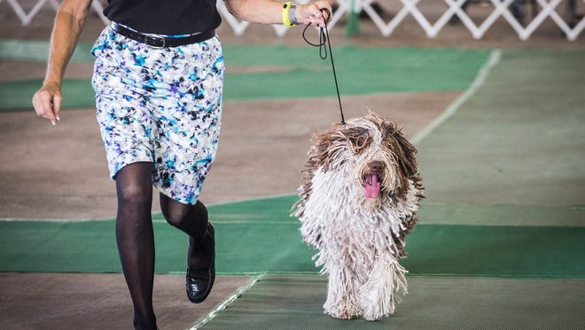 Dog trainers from all over the country gathered in Muncie for the American Kennel Club Iced Tea Cluster Dog Show at the Delaware County Fairgrounds in 2017.