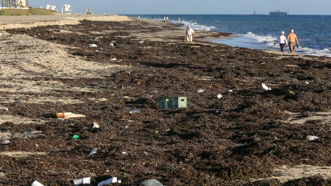 Thick mats of seaweed with trash tangled throughout it cover parts of the beach about a 100 yards south of Midtown Beach in Palm Beach on Dec. 16, 2015.