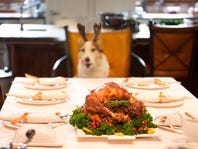 Thanksgiving food and dogs: What not to feed your pet from a holiday table