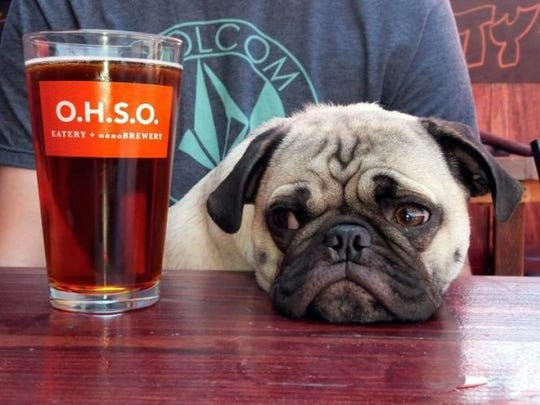 What could make the beers and canine buddies at local O.H.S.O. Brewery locations even better?  Try free doughnuts.