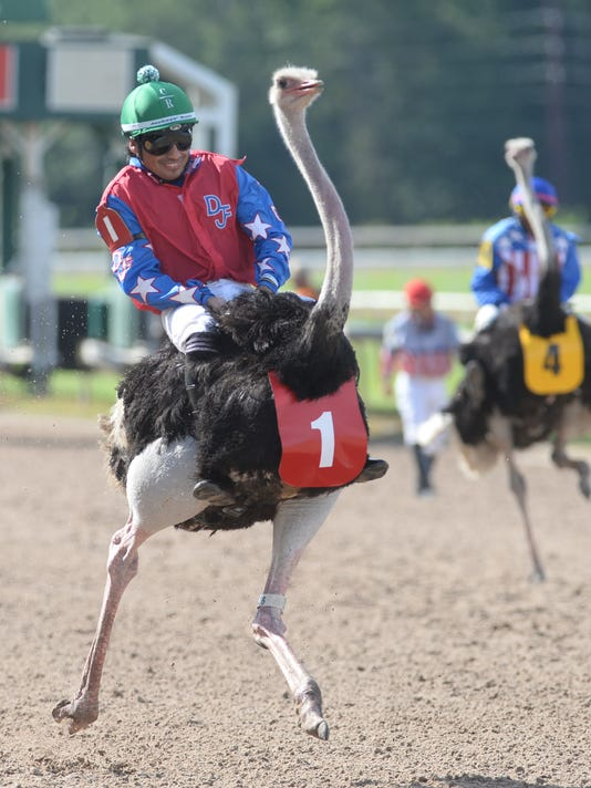 The Exotic Animals Races at LA Downs