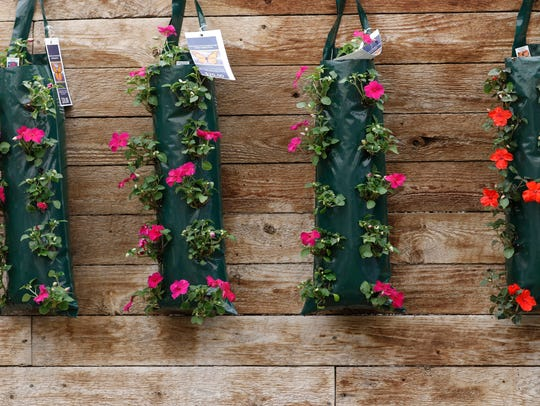 Impatiens pouches are hanging on the wooden wall at