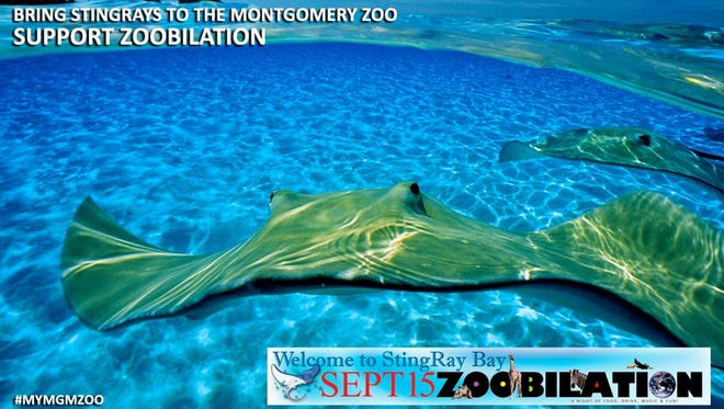 Zoobilation is Thursday at the Montgomery Zoo.
