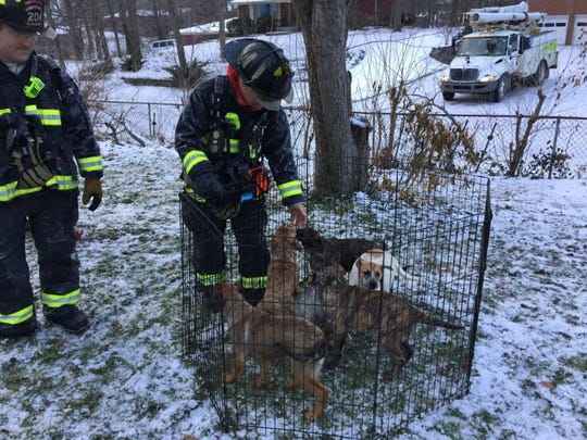 Wayne Township firefighters tend to puppies saved from a burning home.