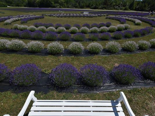 636043810052764387-DCN-0720-lavender-fest-3.jpg