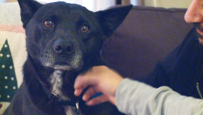 Bear, a black rescue dog, bolted his owner's car after a wreck and was missing for two years.