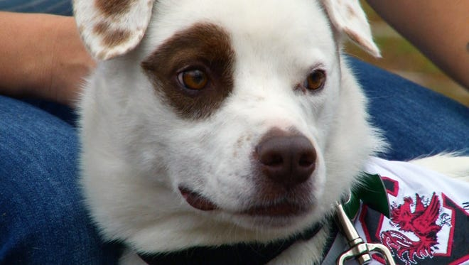 Ace, 3, will travel more than 1,000 miles Dec. 26, 2015, back to his owner in Granger, Texas, after being found near Irmo, S.C.