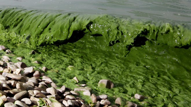 Algae washes ashore off  South Bass Island State Park, Ohio in Lake Erie July 29, 2015.