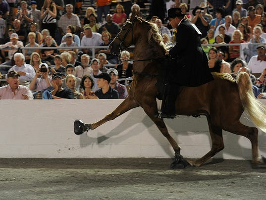 horse soring 031114