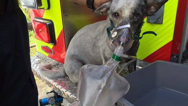 Rick Cruz/PDN Guam firefighters place an oxygen mask on a dog that was at the scene of a house fire on Nalao Place in Barrigada on Sept. 24. Guam firefighters place an oxygen mask on a dog that was at the scene of a house fire on Nalao Place in Barrigada on Sept. 24.