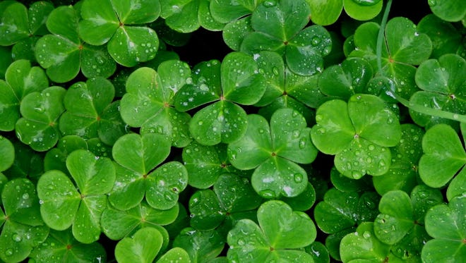 Today is March 17, St. Patrick's Day!