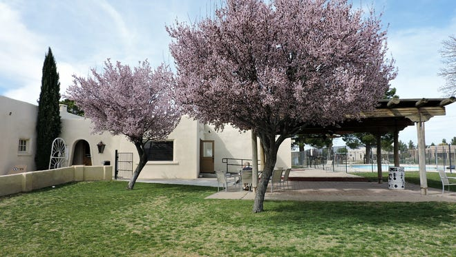 Blossoms at the Rio Mimbres Country Club are showing signs of spring. The golf course, and adjoining grounds of the restaurant, clubhouse and bar, are in full bloom and ready to serve the spring and summer seasons of golfers and its members at 2400 E. Pine St. in Deming.