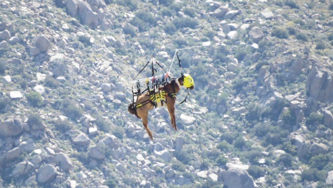 A horse is airlifted by helicopter from a ravine Sunday, April 3 near Palm Springs.