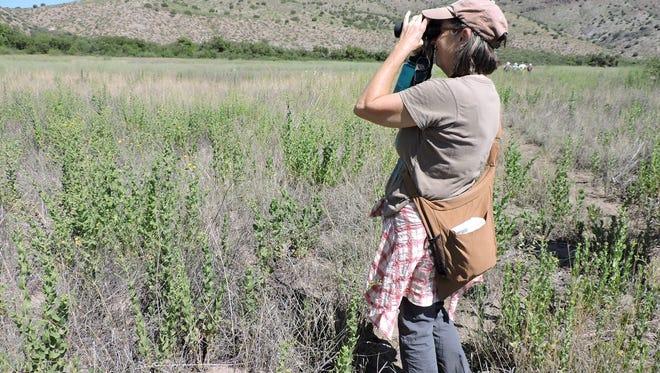 Beth Bardwell takes a closer look at a bird near the Gila River.