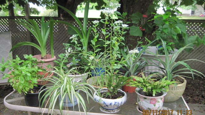The Piscataway Garden Club will hold its first meeting of the season Sept. 21.