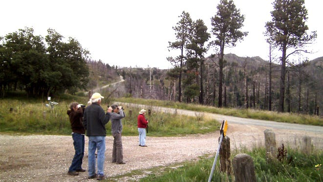 LCBC birders scan the skies above Skyline Campground for turkey vultures, ravens, woodpeckers, sparrows and fall migrants.