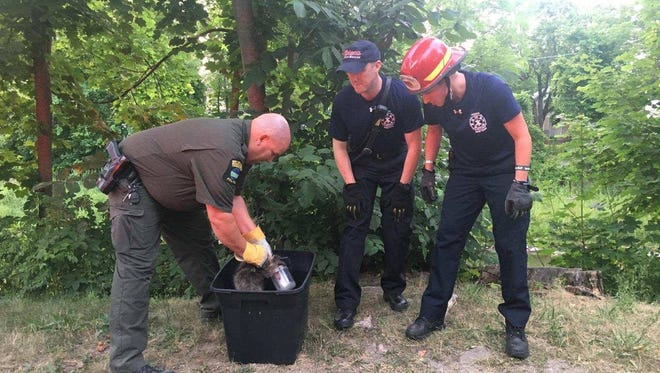 Officials from the Ithaca Fire Department and the Department of Environmental Conservation rescued a raccoon Thursday.