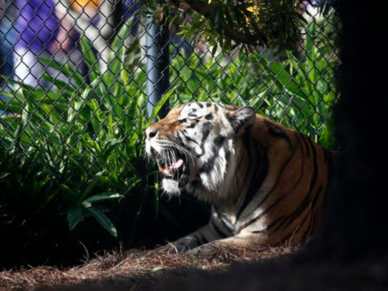 FILE - In this Oct. 17, 2015, file photo, Mike VI,