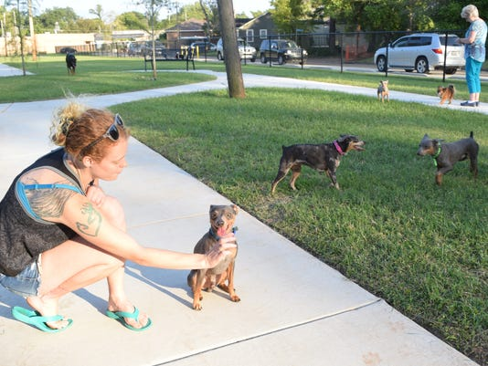 Hevan Richards plays with Doof, one of her four mini doberman pinchers at the new dog park in Alexandria. The other three are Phineas, Stacy, and Isabella